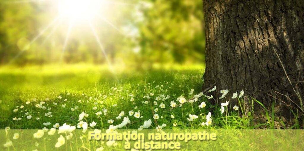 Formation naturopathe à distance